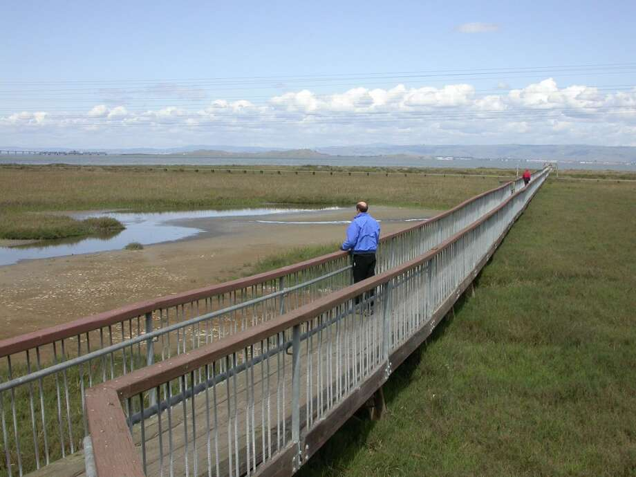 At Baylands, the catwalk extends over tidal wetlands to viewing deck on South Bay Photo: Tom Stienstra