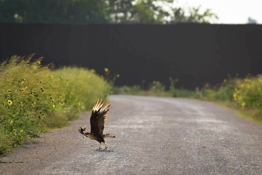 A crested caracara pecks a troublesome Northern Mockingbird in front of  the U.S-Mexico border fence that crosses through The Nature Conservancy's preserved land near Brownsville. Photo: Marie D. De Jesus, Staff / © 2014 Houston Chronicle