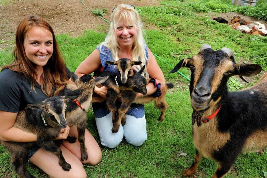 Neighbor Crystal Hayes, left, and farm owner Julie Murray hold San Clemente Island Goat quadruplets on Tuesday, June 10, 2014, at Mack Brin Farms in Ballston, N.Y. The kids names are Peanut, Butter, Annie, Jelly. Joining them is the kids' dam, Rae. (Cindy Schultz / Times Union) Photo: Cindy Schultz / 00027273A