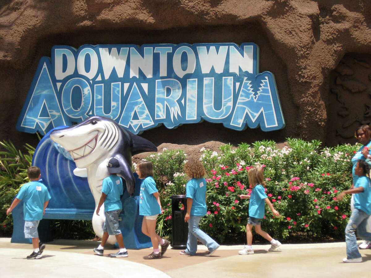 Downtown Aquarium Cuisine: SeafoodMenu: BuffetTime: 10 a.m.-4 p.m.Location: 410 BagbyPhone: 713-223-3474Reservations: YesPrice: Adults, $39.99; seniors, $29.99; children 3-10 years old, $16.99 (Kids 2 & under are free.)Website: downtownaquarium.comBonus: Over 40 buffet items to choose from.