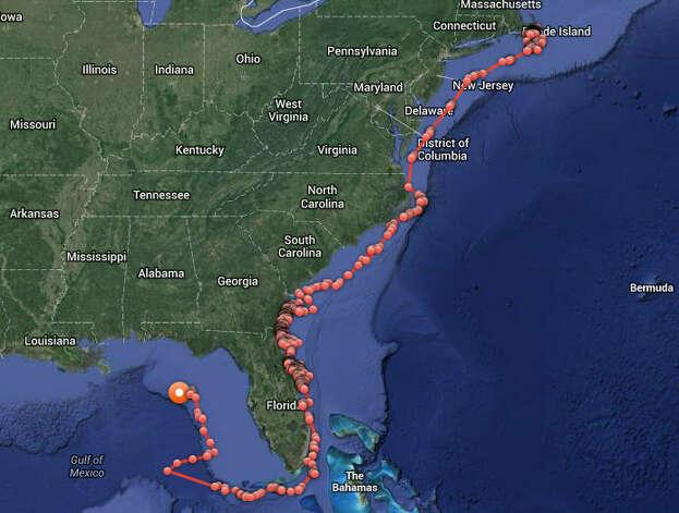 Great White Shark Tracker Katherine