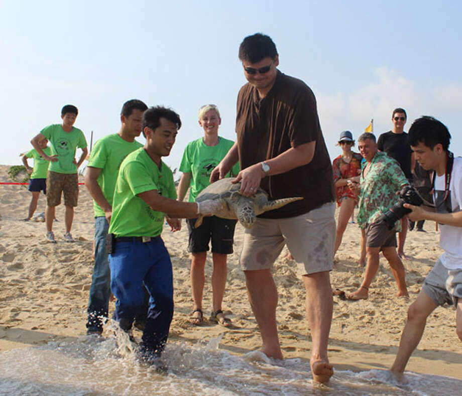 Former Houston Rockets star Yao Ming helps release rescued turtles back to the sea on a beach in China.  (Photo courtesy of Sea Turtles 911) Photo: Picasa