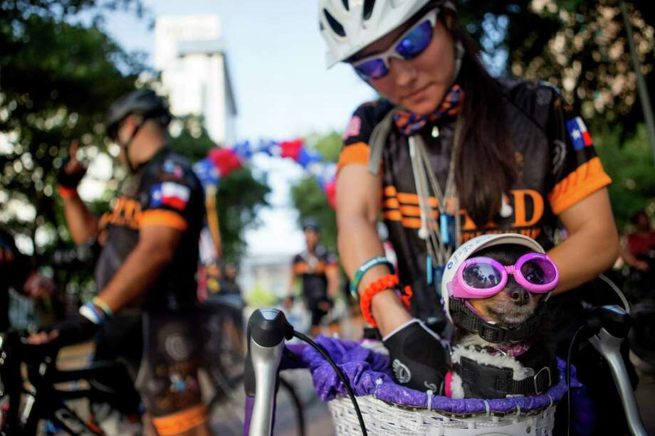 "Houston Police Department patrol officer, Ana Gomez and her dog, Precious, prepare for the Houston Police Department Officers begin their Pedal for a Cure starting from Discovery Green, Tuesday, June 17, 2014, in Houston. A total of 34 officers, leukemia survivors and family members of survivors, will begin their seven-day trek to Tacoma, Washington. Each officer will wear a special ""dog tag"" bearing the name of the patient or survivor who inspired them to ride in this year's 2,900 mile relay. Photo: Cody Duty, Houston Chronicle / © 2014 Houston Chronicle"