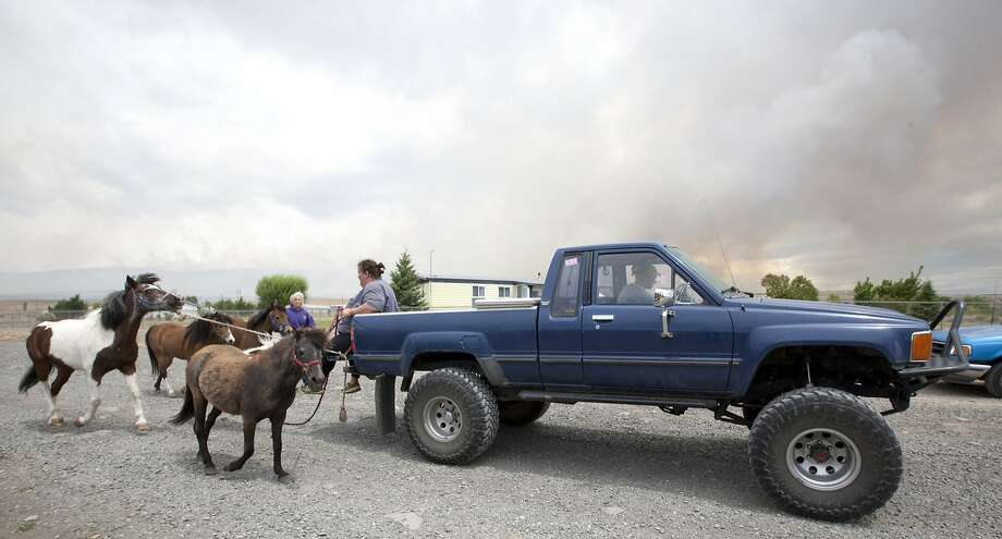 Horses are led away from a home on Cabin Lane that was threatened by a brush fire on the nearby L.T. Murray Wildlife Area north of Selah, Wash. June 17, 2014. The fire, the cause of which is under investigation, has burned at least 6,000 acres and destroyed a shop and barn. (AP Photo/Yakima Herald-Republic, Gordon King) Photo: Gordon King, Associated Press