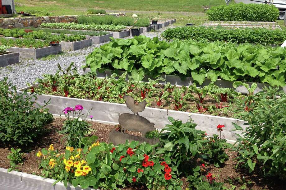Now that the spring weather has finally warmed up, the gardens at Sport Hill Farm in Easton are starting to grow rapidly. Photo: Patti Woods / Westport News