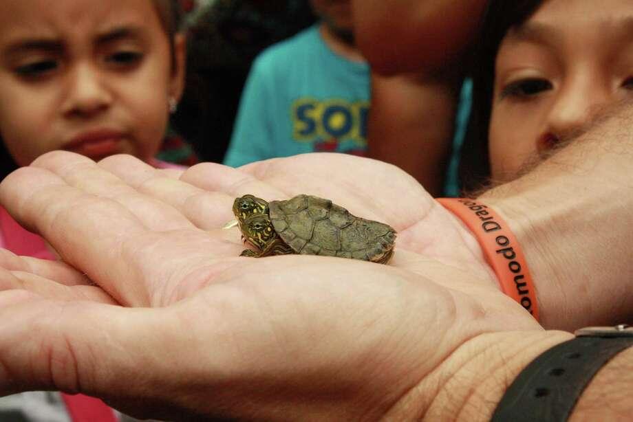 The left head is Louise Photo: Courtesy Of The San Antonio Zoo