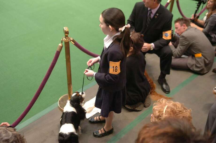 Hayley Hendrick, 13, from New Canaan, CT, owner with her father Bruce Hendrick, waits to handle her Cavalier King Charles spaniel, Micah, at the Westminster Kennel Club, at Madsion Square Garden on February 15, 2010. Photo: Helen Neafsey / Greenwich Time