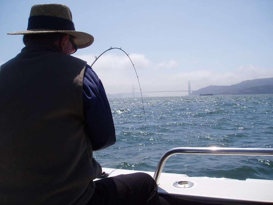 Benny Tschirky battles a halibut just offshore Angel Island . . . Photo: Armand Castagna