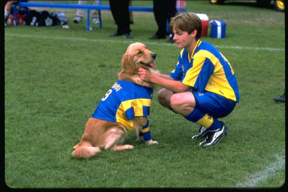 """A drive-in movie theater experience is coming to New Canaan Saturday night, as part of the town's World Cup Weekend.  The movie """"Air Bud – World Pup"""" will be screened on three big TVs in the Pop Up Park, at the corner of Elm Street and South Avenue, at 8 p.m. Find out more."""