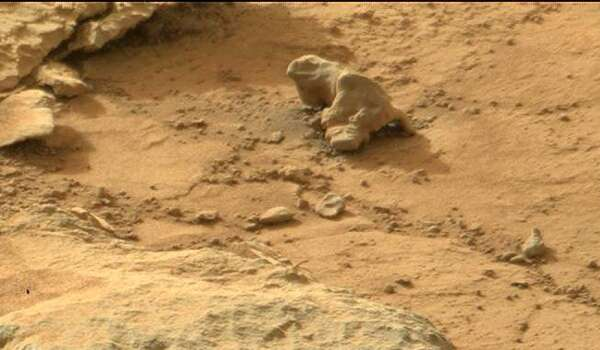 A space iguana (zoomed).
