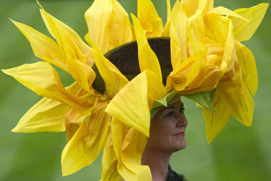 Wilted petals:A giant daisy at the Royal Ascot horse racing event near Windsor, Berkshire, looks like she could use a little watering. Photo: Carl Court, AFP/Getty Images