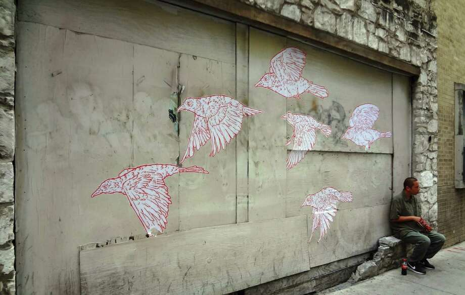 """Part of Julio Barrientos' """"Undesirables"""" bird drawing project can be found at 161 E. Commerce St. He re-created his work after his first drawings vanished overnight. Photo: Photos By Steve Bennett / San Antonio Express-News"""