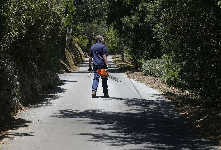 Butch Kronlund, president of the Coastlands Mutual Water Co., walks in an area in Big Sur where seven  of 137 bay laurel trees in a recent survey tested positive for the microbe that causes sudden oak death. Photo: Michael Macor, The Chronicle