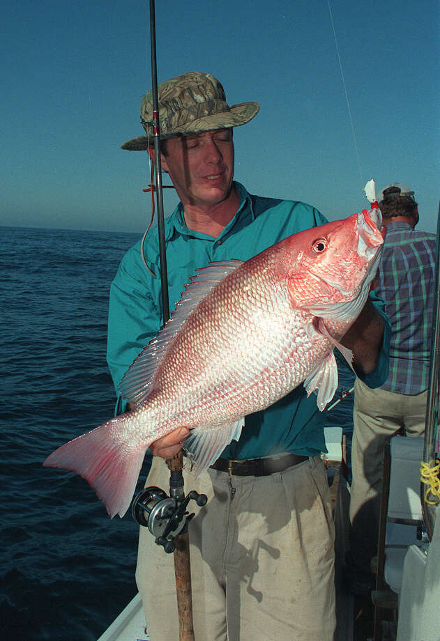 As part of a pilot program to better gauge red snapper harvest, Texas coastal fisheries staff interviewed more than 2,000 offshore anglers during the recent nine-day snapper season in federal waters of the Gulf of Mexico. Almost all of those fishermen landed their two-snapper daily limit. Photo: SHANNON TOMPKINS, Staff / HOUSTON CHRONICLE
