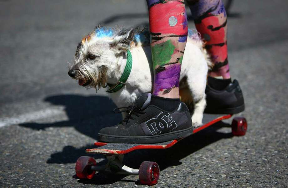 A pup gets a ride on a skateboard piloted by a painted participant. Photo: JOSHUA TRUJILLO, SEATTLEPI.COM / SEATTLEPI.COM