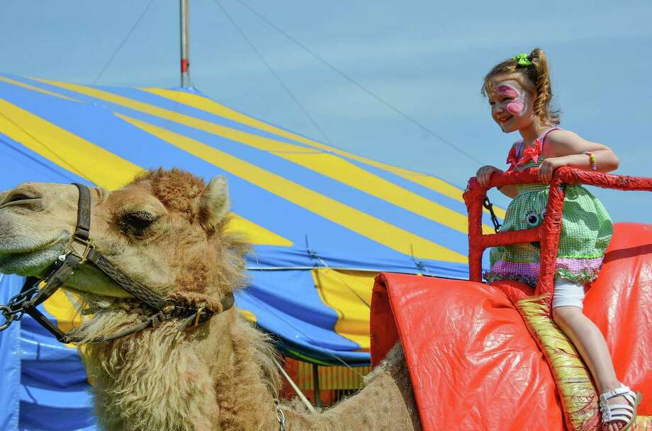 Nicole DeLeon rides a camel high above the crowd, during the 5th Annual New Canaan Family Circus featuring the Zerbini family, and hosted by the New Canaan YMCA and Kiwanis Club.  Saxe Middle School, June 21, 2014. Photo: Jeanna Petersen Shepard, Freelance Photo / New Canaan News freelance