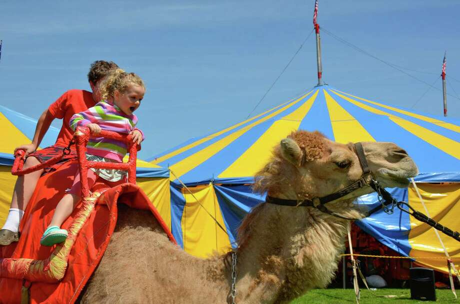 Children have plenty of laughs atop the camels during the 5th Annual New Canaan Family Circus featuring the Zerbini family, and hosted by the New Canaan YMCA and Kiwanis Club.  Saxe Middle School, June 21, 2014. Photo: Jeanna Petersen Shepard, Freelance Photo / New Canaan News freelance