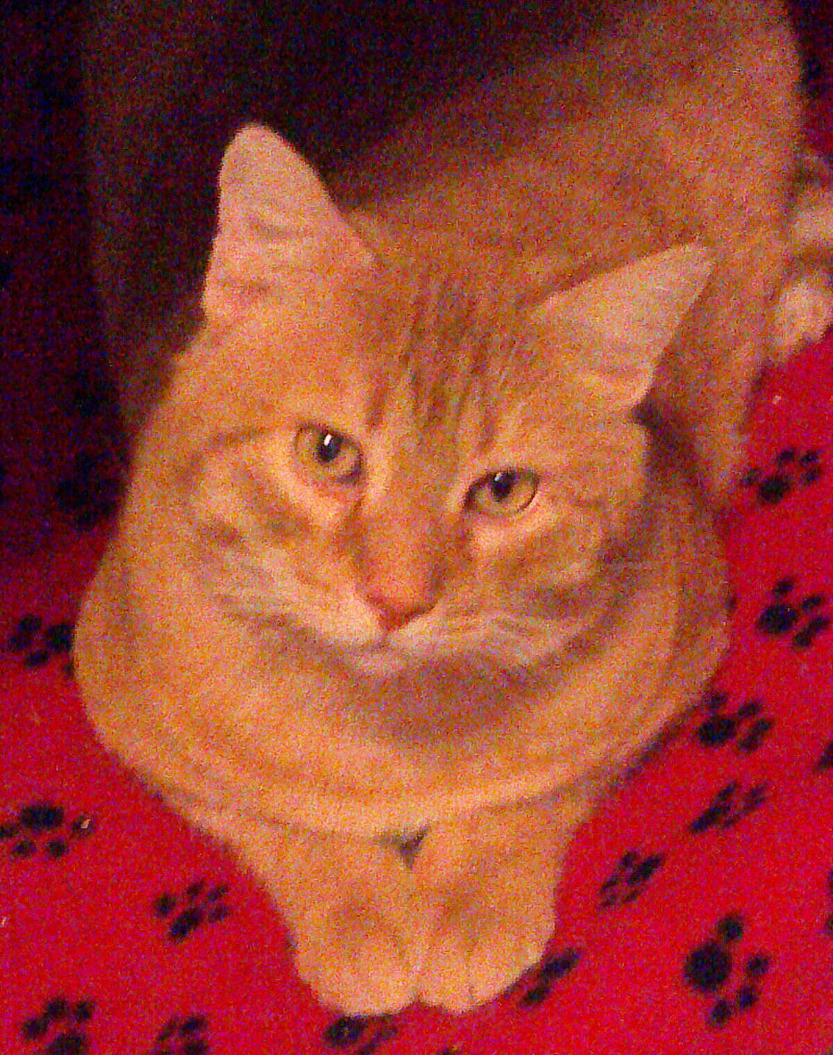 Mannie is a big, affectionate 4-year-old boy. (Mary Lou Baker)