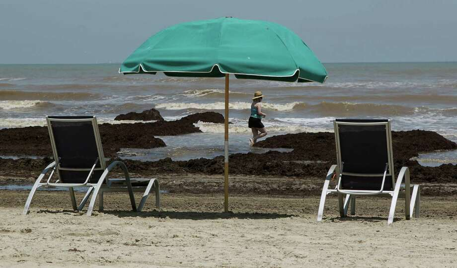 A woman walks in the surf as seaweed washes ashore on the beaches along Seawall Boulevard Wednesday, June 11, 2014, in Galveston. Photo: James Nielsen, Houston Chronicle / © 2014  Houston Chronicle
