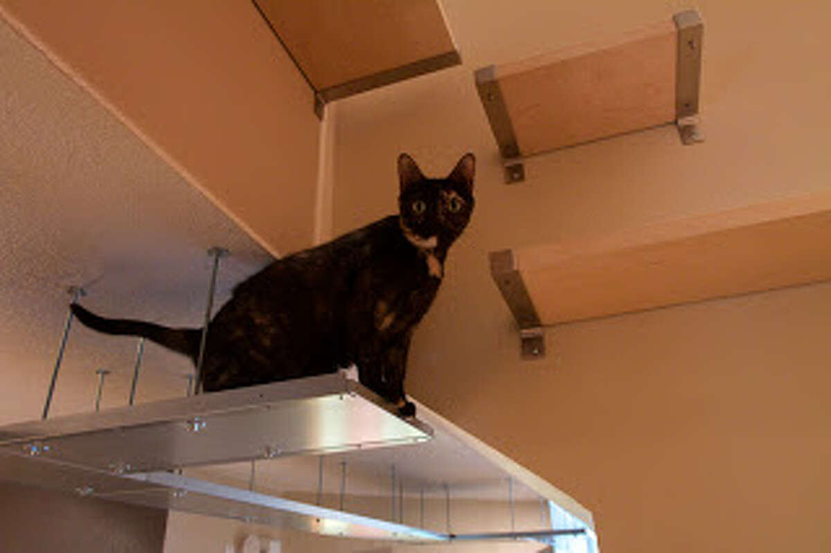 Cat Playground One lucky Texas cat got the playground of its life when his owner constructed a special cat climbing system attached to the ceiling, using shelves and attachments from Ikea.