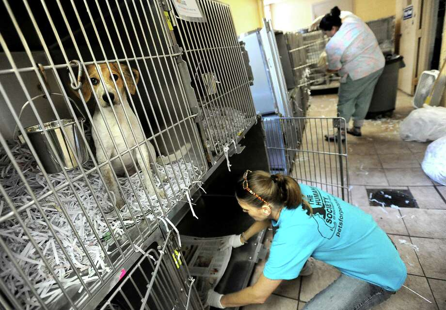 Cynthia Staib and Andrea Lindsey clean out cages in the small dog room at the Humane Society of Southeast Texas in Beaumont, Tuesday. Tammy McKinley/The Enterprise Photo: TAMMY MCKINLEY