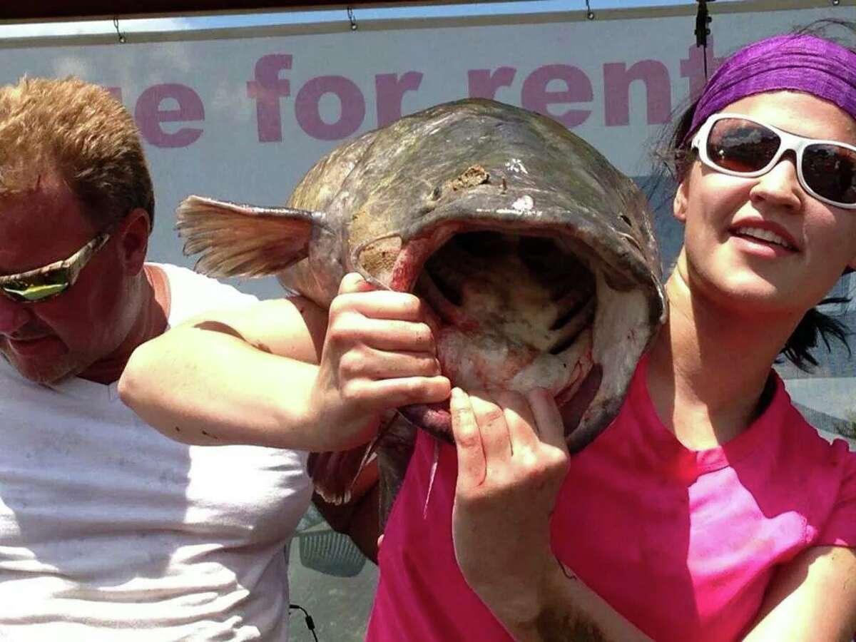 Lucy Milsap and her 52 pound winner at the Tawakoni Noodling Tournament on Lake Tawakoni, Texas.