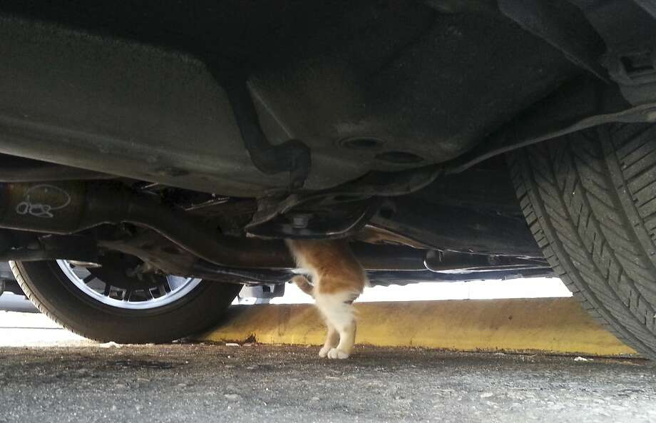 Just as I thought, it's your catalytic converter. Don't worry I'll have it purring in no time:A  photo released by Fort Lauderdale Fire Rescue shows one of two kittens trapped in a car earlier this month in Fort Lauderdale, Fla. Firefighters found one caught in the undercarriage of the vehicle and the other in the engine area. Both were returned unharmed to their owner. Photo: Fort Lauderdale Fire Rescue, Associated Press