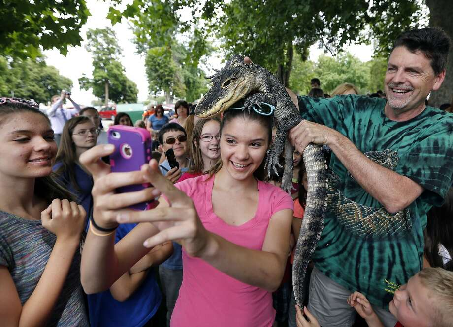 "Mckenzie Tygret (13) takes a selfie with an alligator on her head at Keewaydin Park in Kennewick, Wash., on June 25, 2014. Scott Petersen, the ""Reptile Man,"" showed off a variety of reptiles during a presentation hosted by the Mid-Columbia Libraries. (Matt Gade/Tri-City Herald/MCT) Photo: Matt Gade, McClatchy-Tribune News Service"
