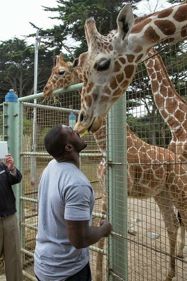 "San Francisco 49ers linebacker Patrick Willis feeds a giraffe at the San Francisco Zoo on Wednesday, June 25, 2014. Photo: Marianne Hale, San Francisco Zoo / ""Pacifica Arts, Inc."""