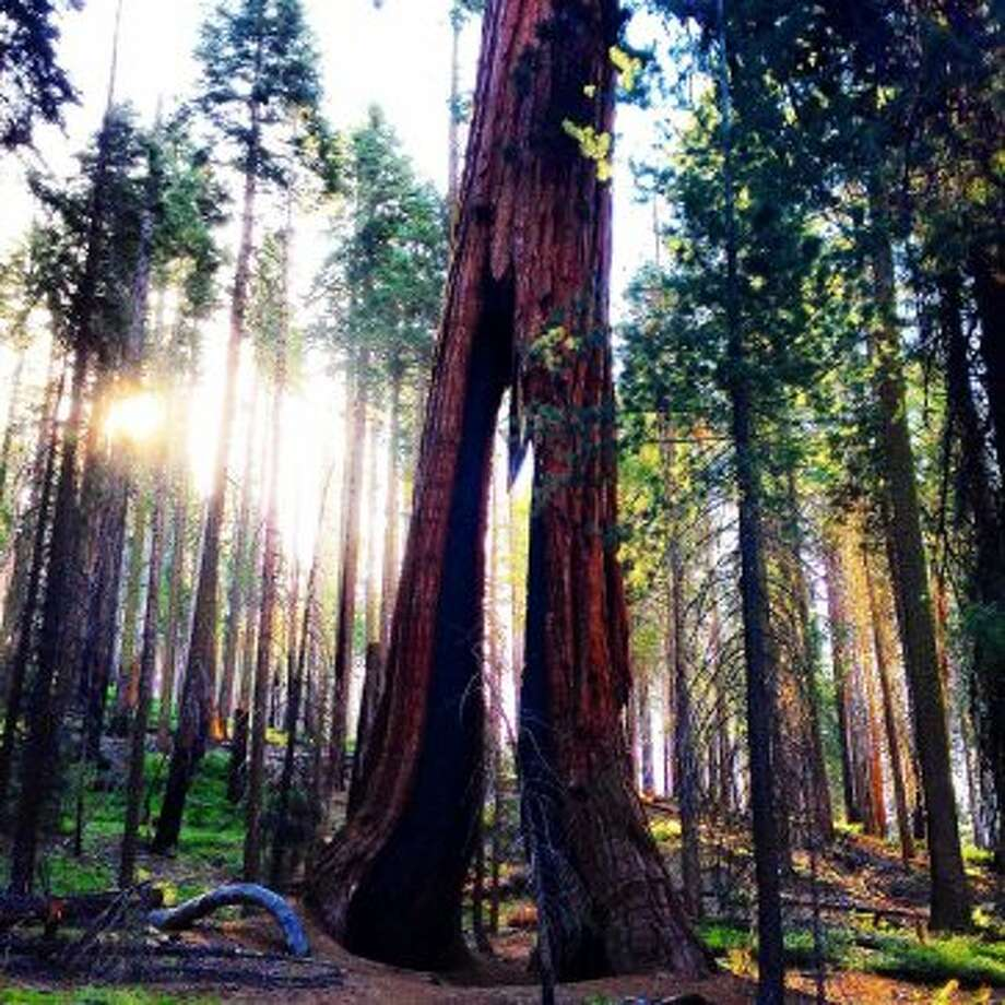 """Sunrise hike in Mariposa Grove this year."" Photo: Submitted By Josh Lee"