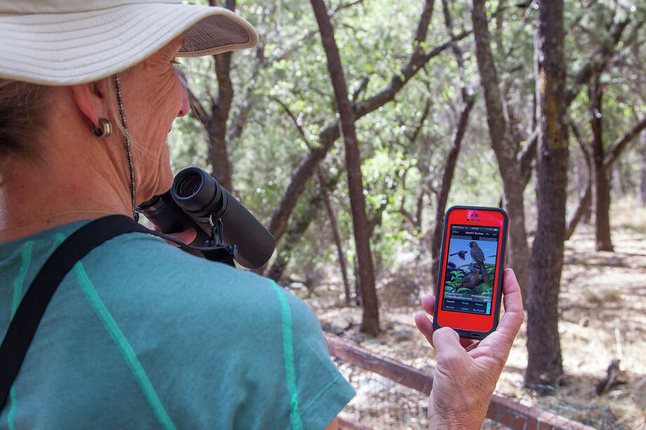 People are using smart phone apps to answer the question, What's that bird?  Photo Credit:  Kathy Adams Clark.  Restricted use. Photo: Kathy Adams Clark / Kathy Adams Clark/KAC Productions