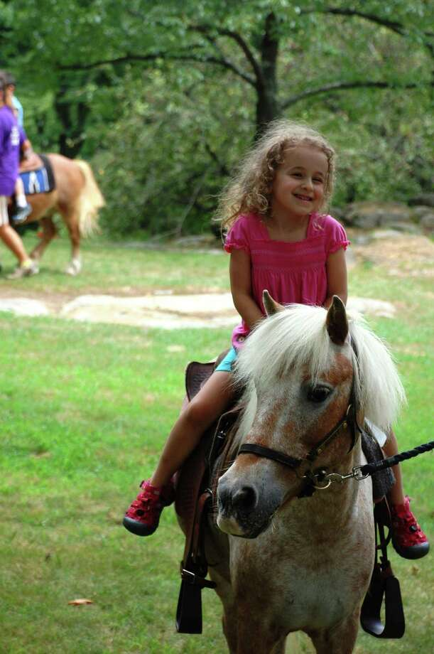 The ponies of Pied Piper Pony Rides will return to the Bruce Museum in Greenwich, Conn., on Sunday, July 13, 2014, as part of Family Day celebrations that will honor the Year of the Horse. Photo: Contributed Photo / Stamford Advocate Contributed photo