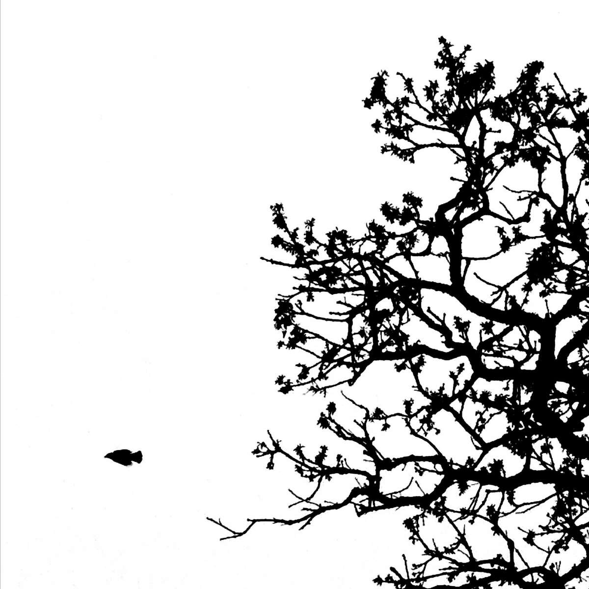 """Day 9, April 1, 2012. Like a dart, a starling flies from its perch amidst the barren branches of That Tree. That Tree is an ancient Bur Oak growing on the edge of a cornfield near Platteville, WI. Using his iPhone 4S, Mark Hirsch photographed the tree every day from March 24, 2012 until March 23, 2013 capturing a year long snapshot of life in and around the ancient oak. Photographs from the iPhone photo a day project """"That Tree"""", by Mark Hirsch."""