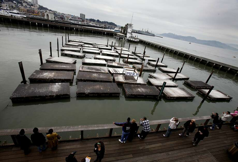 The sea lions have once again disappeared from Pier 39 in San Francisco, much like they did in 2009 (above). Photo: Brant Ward, The Chronicle