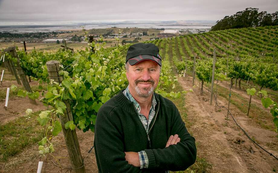 Michael Havens replanted Albariño cuttings from Santa Barbara in a spot in southern Napa. Photo: John Storey, Special To The Chronicle