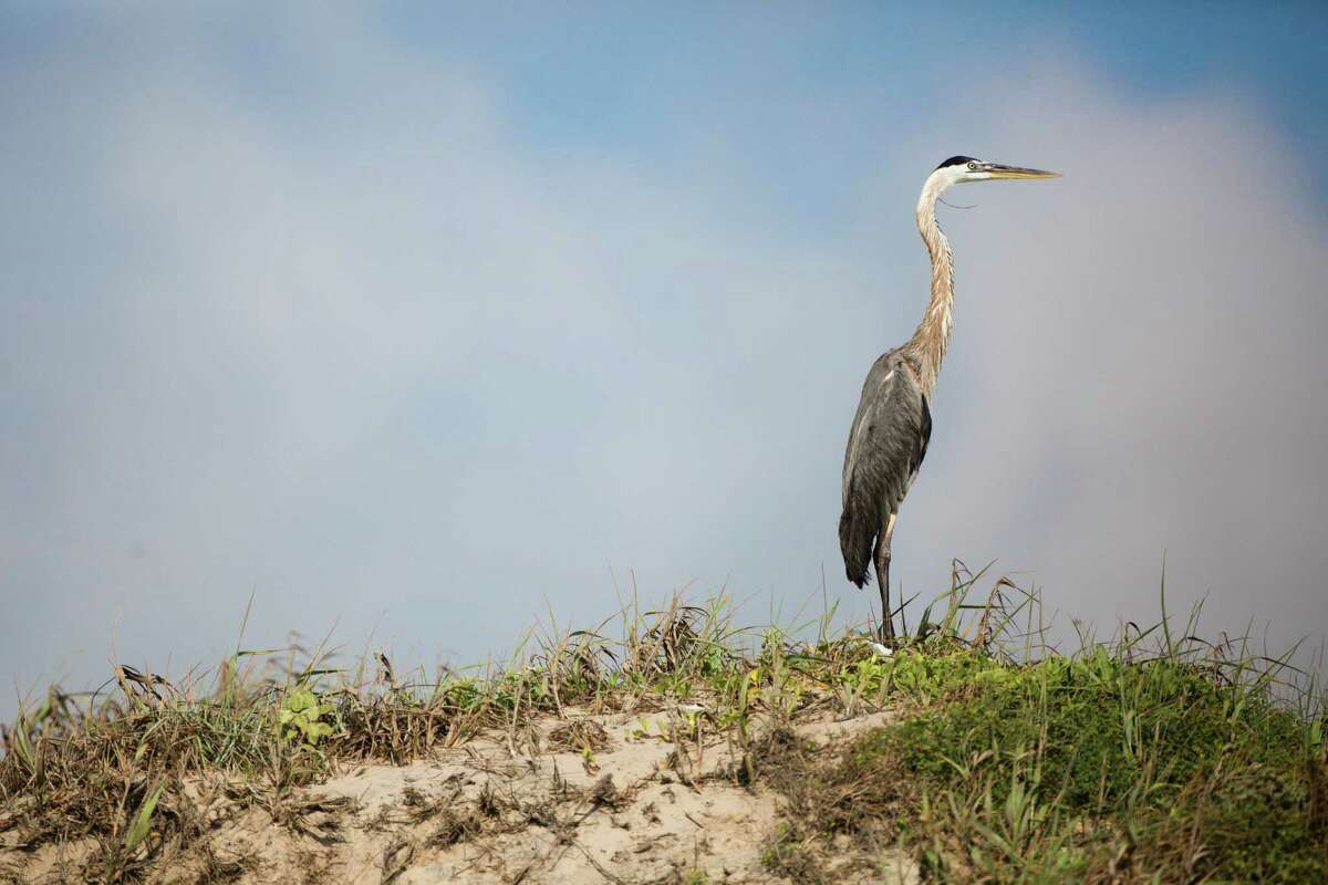 Marine wildlife has built a strong presence on the proposed location for the new commercial-mission-only SpaceX spaceport at Boca Chica, Wednesday, June 11, 2014. ( Marie D. De Jesus / Houston Chronicle )