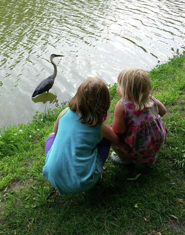 """Eliza, 5, and Flora, 2, Schlesinger of Albany were captivated by this great blue heron that visited the lake in Albany's Washington Park earlier in June. Dad Matt says they watched it catch fish for 30 minutes. """"We've never seen one there in seven years in the neighborhood,"""" he said. He suggests that when people watch an animal like that to be careful as you approach, making sure it?s not too spooked or seems aggressive.(Matt Schlesinger)"""