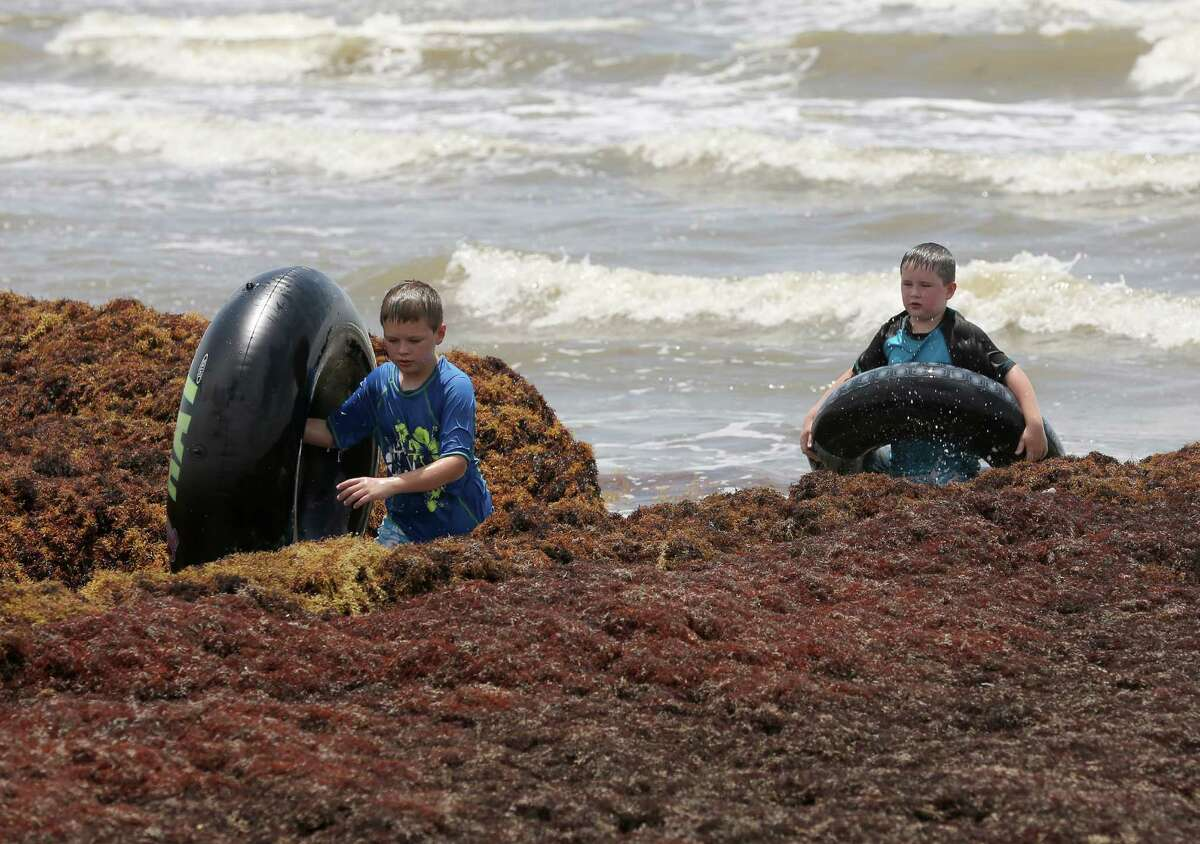 Left to right: Asher Ridge, 10, and his brother Fynnlan Ridge, 8, trudge carefully through seaweed as they make their way up the Galveston beach Tuesday.