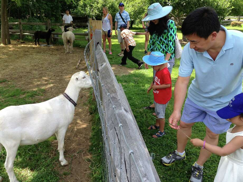 Members of the United Nations contingent to visit Westport on jUNe Day meet the menagerie at Wakeman Town Farm during the 49th annual event Saturday. Photo: Contributed Photo / Westport News