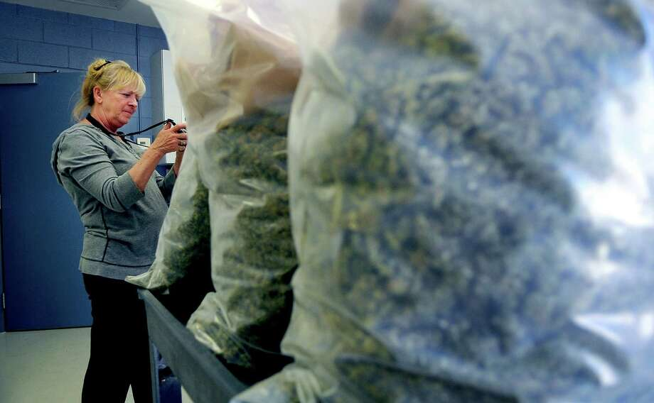This March 14, 2013 photo shows Rocky Mountain Miracles dispensery owner Alvilda Hillery taking photos of the 36 pounds of medical marijuana that were seized from her shop, along with 600 plants, during a raid.  Alvida Hillery sued police to return her 604 pot plants or pay $3.3 million in compensation after she was acquitted of drug-cultivation charges but later dropped the suit in exchange for the city granting her a new dispensary license. Photo: MICHAEL CIAGLO, AP  / THE GAZETTE