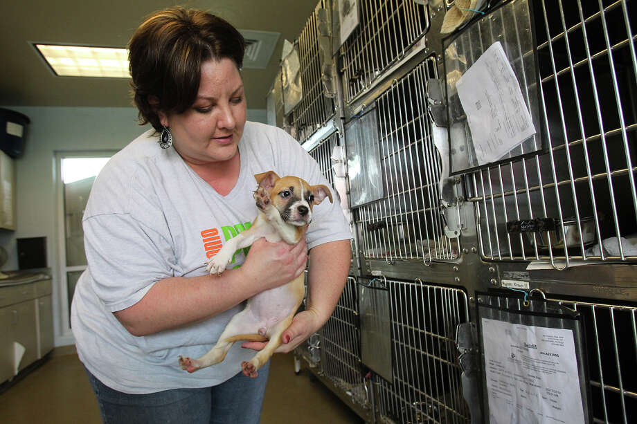 Rosemary Jones shows a young puppy in the cages at San Antonio Pets Alive earlier this month. Photo: TOM REEL
