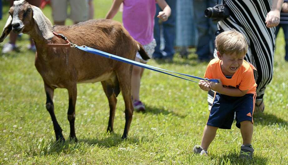 His goat just won't: Tears flow at the Cherry Fair goat races in Schaefferstown, Pa., when one of the contestants refuses 