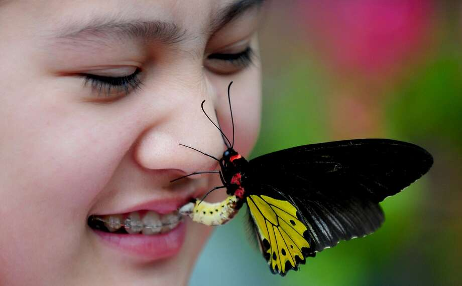 Help! I'm trapped in her braces! A butterfly lights on a tourist's face in the 