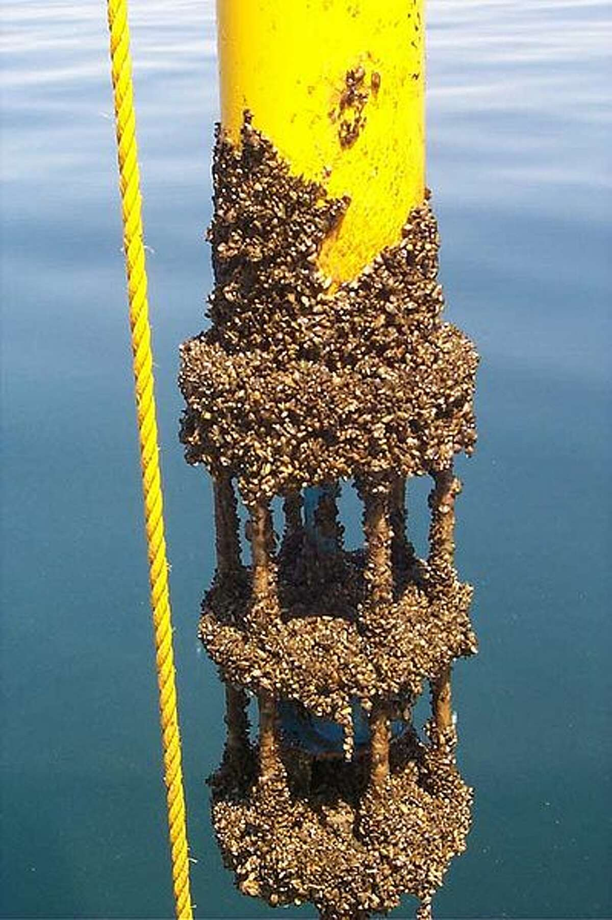 Invasive zebra mussels are infesting Texas lakes, TPWD says
