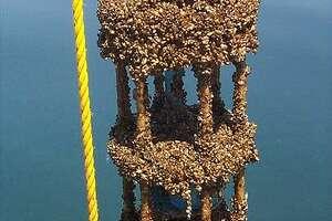 Zebra mussels on a current meter in Lake Michigan