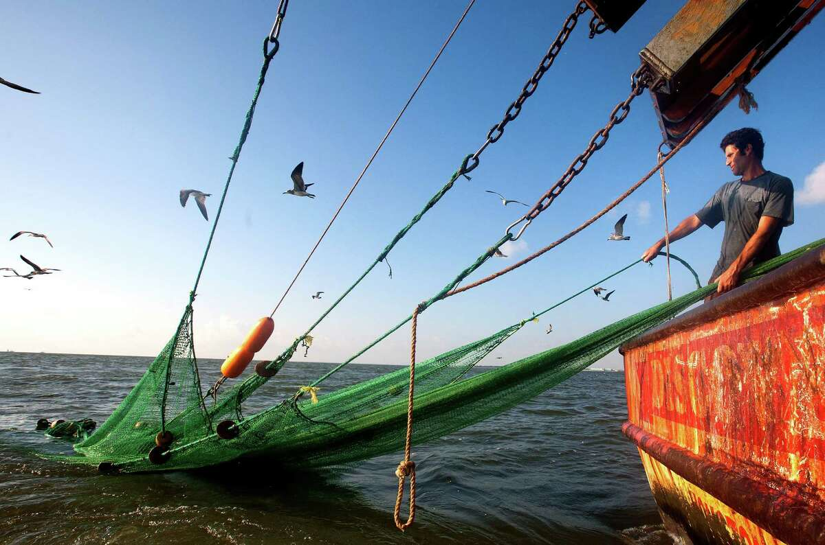 Eric Leshinsky, with Discovery Shrimp & Oyster Company untangles his net and doors after they got tangled with a fellow shrimper near the Houston Ship Channel, Friday, Sept. 27, 2013, (Cody Duty / Houston Chronicle)