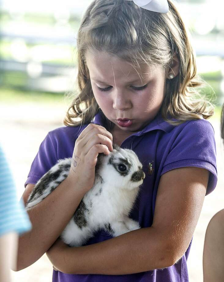 Give it your best twitch, Freckles:Eight-year-old Maggie Bowman gives Freckles a pep talk during the Rabbit and Poultry Show at the Lincoln County Fair in Stanford, Ky. Photo: Clay Jackson, Associated Press