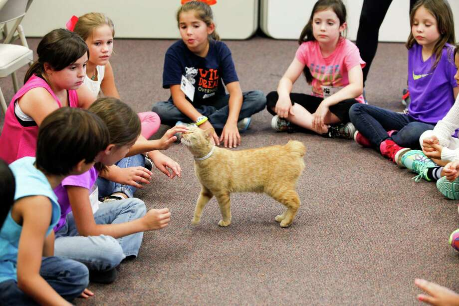 Third and fourth graders pet a cat July 2, 2014 in Houston at Houston SPCA's summer critter camp. Photo: Eric Kayne, For The Chronicle / Eric Kayne