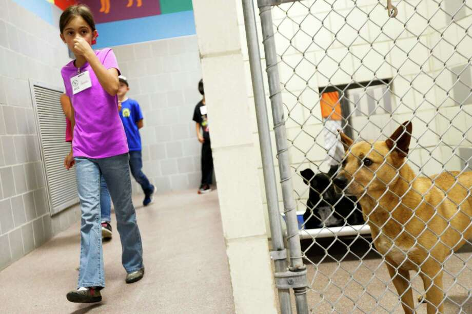 Ainsley Connor, 8, holds her nose as she walks through the dog shelter July 2, 2014 in Houston at Houston SPCA's summer critter camp. The SPCA Summer Critter Camp teaches kids about animals, involves craft-making and hands-on time with shelter animals. Photo: Eric Kayne, For The Chronicle / Eric Kayne