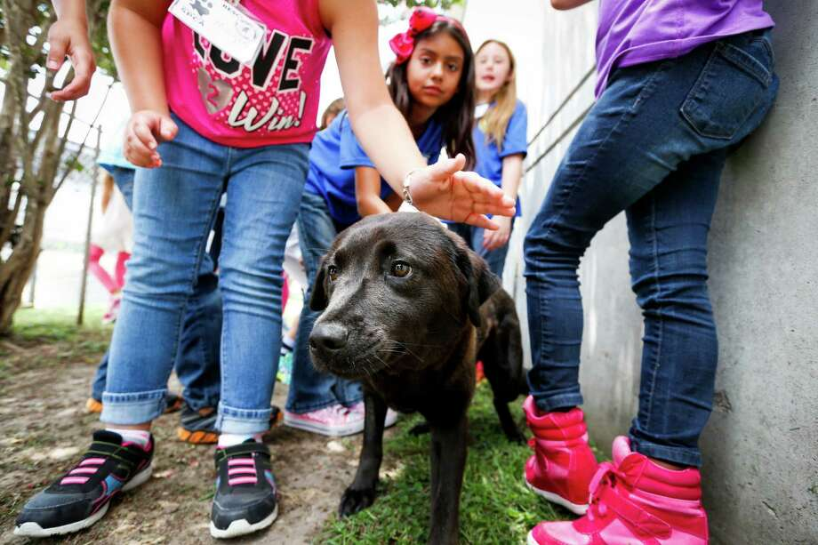 Third and fourth graders pet a dog July 2, 2014 in Houston at Houston SPCA's summer critter camp.  Photo: Eric Kayne, For The Chronicle / Eric Kayne